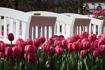 bank mit tulpen