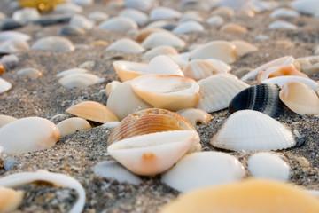 seashells on the sand i