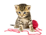 kitten with red ball of yarn on white background poster