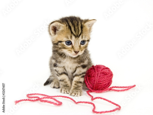 Poster kitten with red ball of yarn on white background
