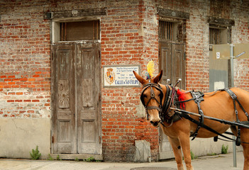 Carriage horse in New Orleans