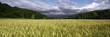 étendue de blé
