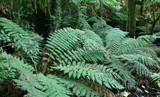 rainforest ferns poster