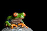 Fototapete Tier - Natur - Reptilien / Amphibien