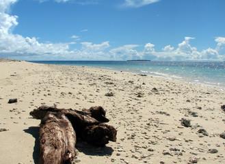 playa con tronco