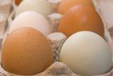 free range eggs poster