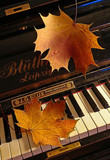 the autumn piano