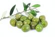 olive 17