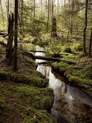 wildnest forest