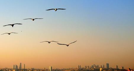 birds flying above city