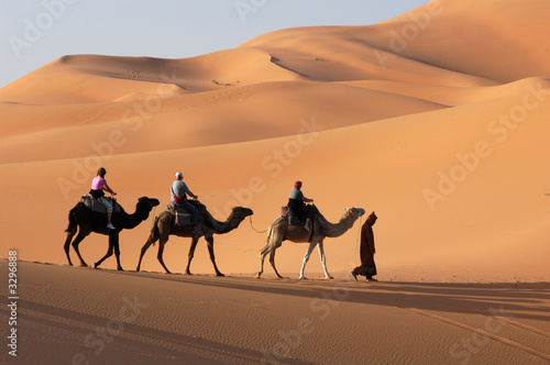 canvas print picture camel caravan in the sahara desert