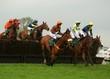 race horses - 3297225