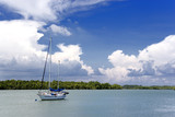 yacht and mangrove swamp poster
