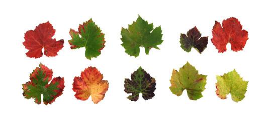 feuilles-4