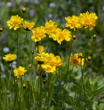 yellow wild flowers