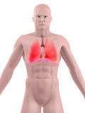 anatomie der lungen poster