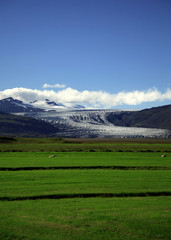 green field and glacier