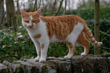 chat roux 2
