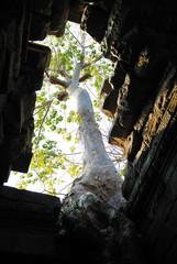 tree in arc