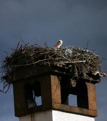 stork on the nest