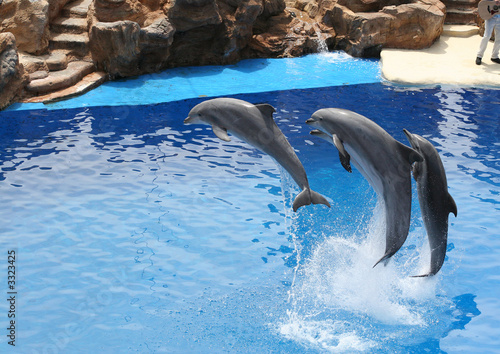 Dolphin dolphins