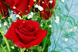 red rose with baby's breath on blue. - 3325072