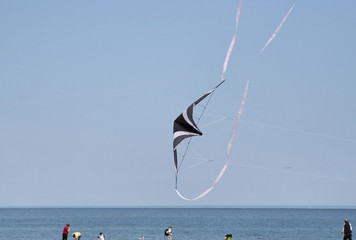 swooping over the beach