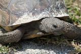 tortoise - 3335215