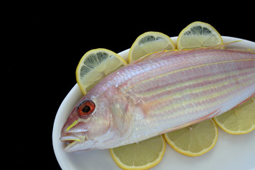 golden threadfin