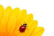 ladybird run