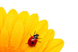 ladybird run poster