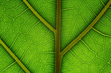 natural grid