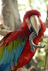 macaw 06