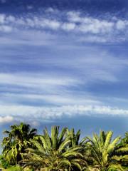palms & skies