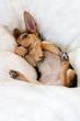 roleta: funny puppy