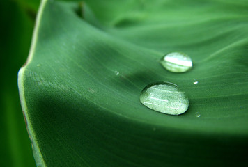 dew on the leaf