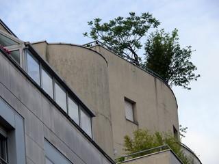 terrasse arborée au dernier étage. paris 19