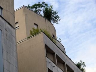 arbres au dernier étage.