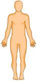 human anatomy flat poster