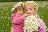 beautiful wildflowers poster