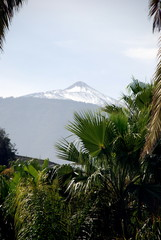 mt teide seen through palms