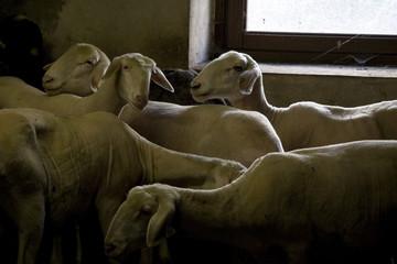 ecomuseo della pastorizia