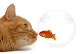 strange friends or naive goldfish poster