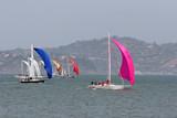 sail boats poster
