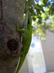 lizard climbing up a tree
