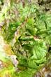 grenoblas