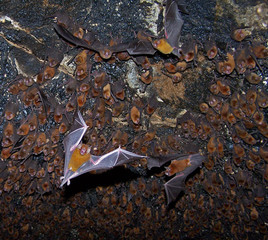 bats in a cave.