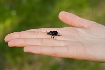 bug beetle on hand palm girl or woman on green