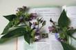 medicinal herbs - symphytum officinale