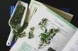 medicinal herbs - thymus vulgaris